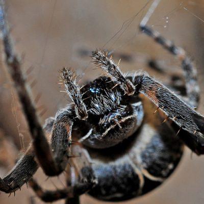 spider-564635b