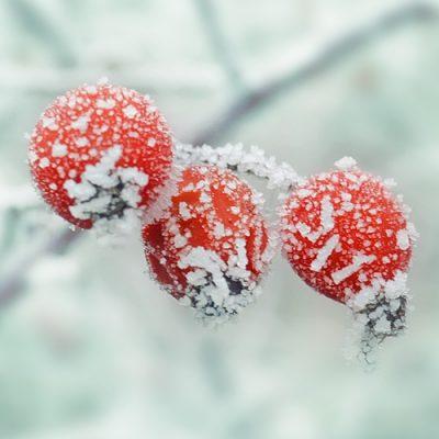 winter-654442b