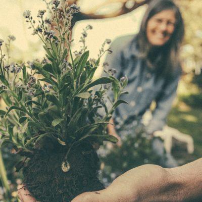planting-865294b